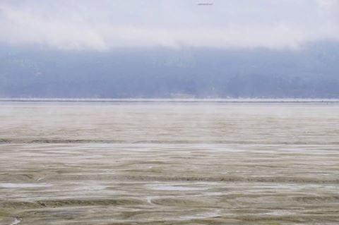 Arcata Bay