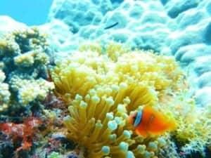 Bakasyon at Scuba Diving sa Coral Reefs ng Pilipinas - A fish swimming under water - Coral reef