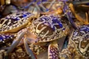 Asul na Alimangong Lumalngoy: Filipino Delicacy - A close up of an animal - Dungeness crab