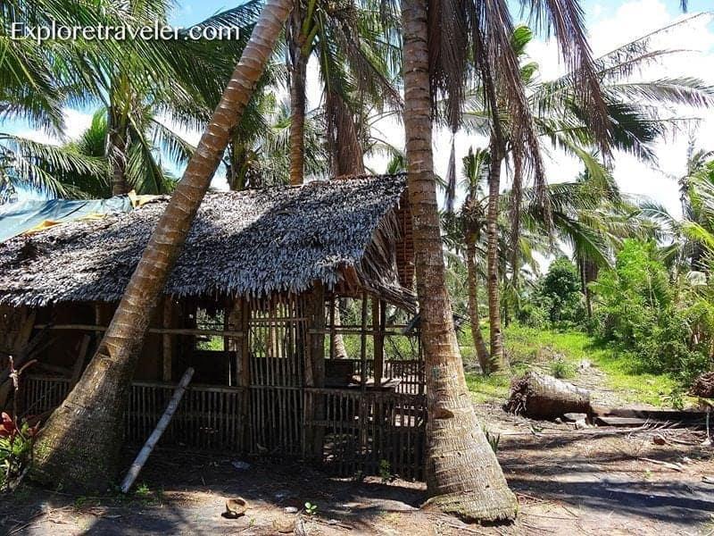 Bahay Kubo: Tradisyonal na pamumuhay ng Filipino sa Bukid - A giraffe standing next to a palm tree - Nipa hut