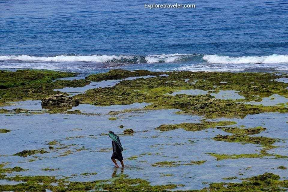 Coral Reefs Green Island
