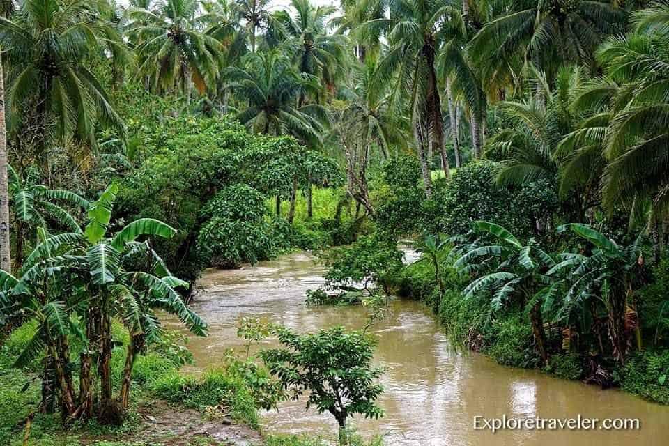 The Jungle Splendor Of Agas