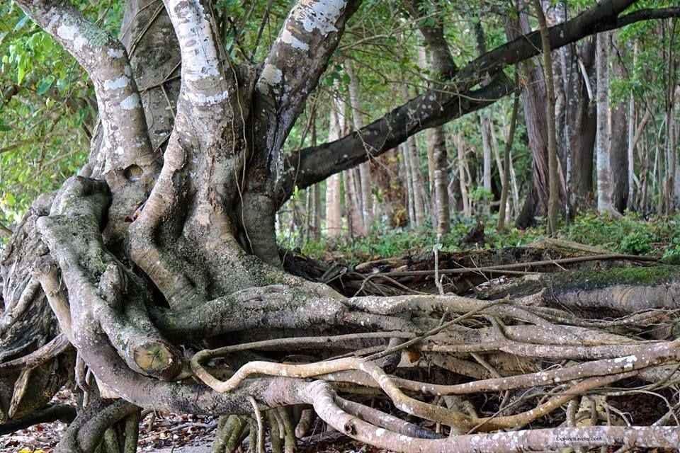 Magic Of The Island Jungle