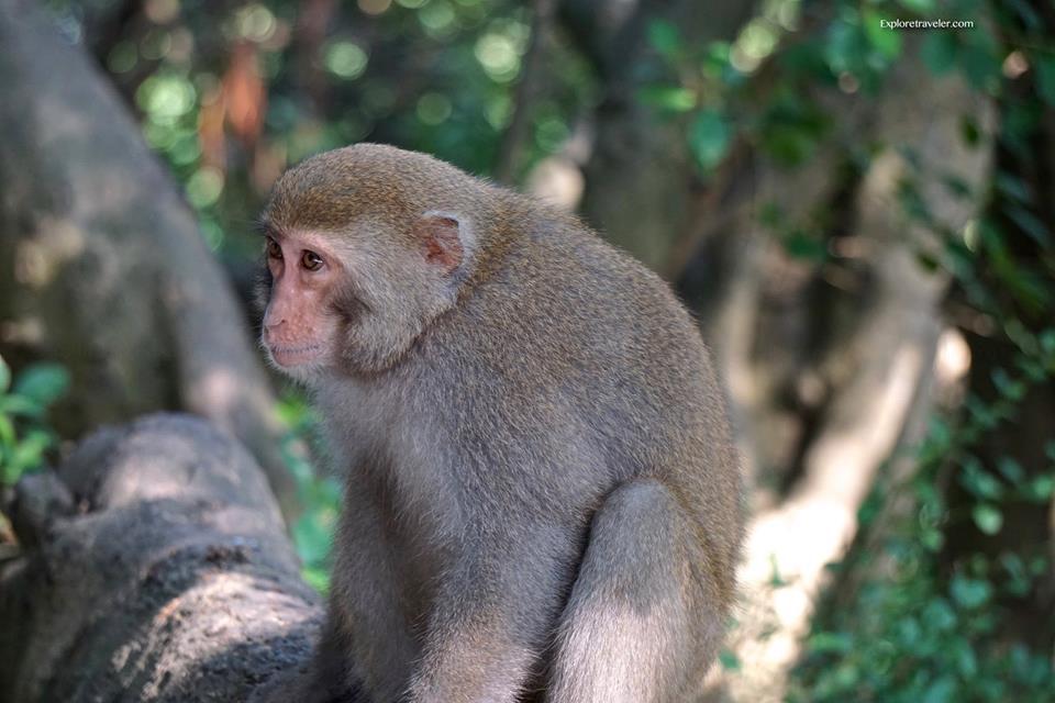 taiwan monkeys