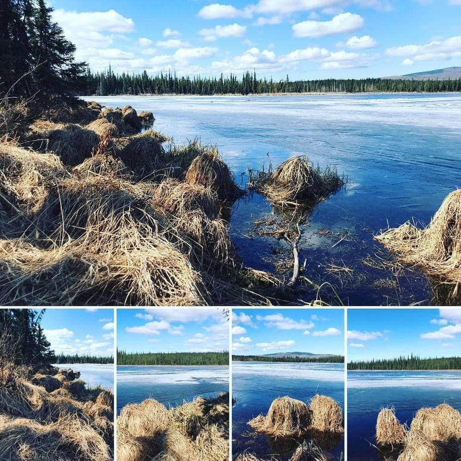 alaska hiking fairbanks uaf smith lake
