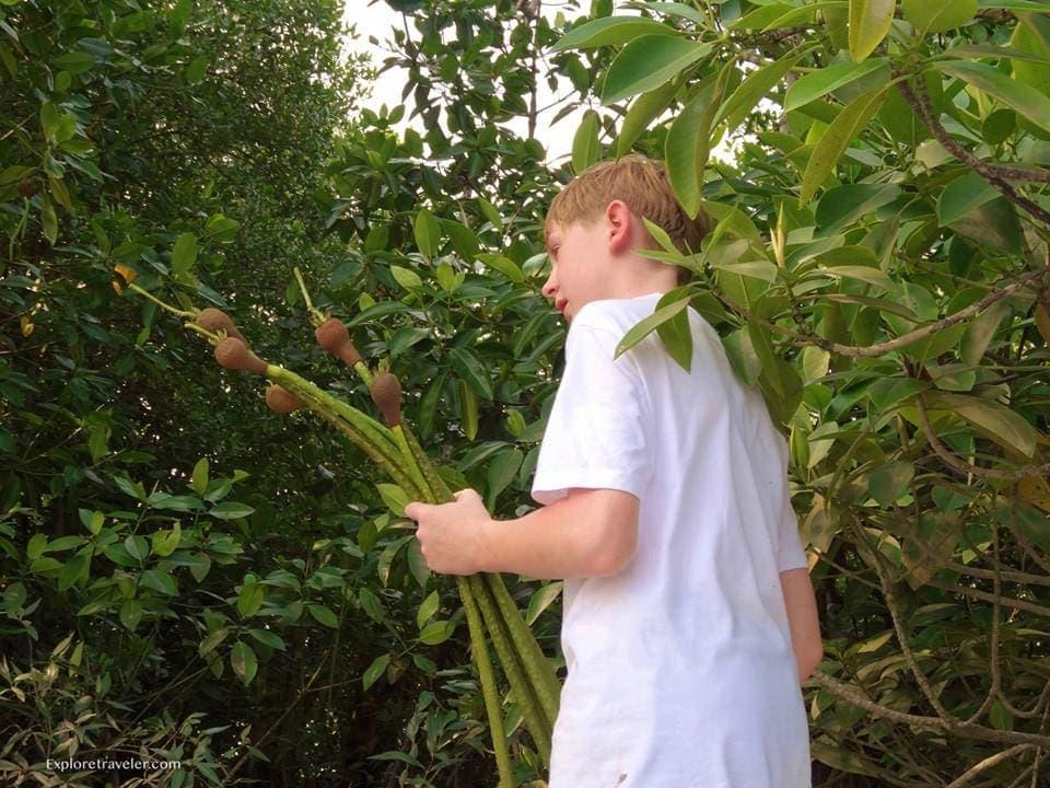 Gathering The Seedlings